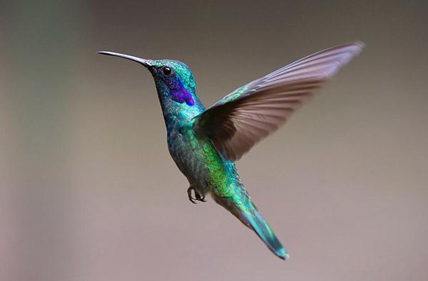 Впервые стало понятно, как птицы видят мир. Это совсем другая реальность