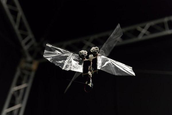 Пора бояться: роботы-насекомые уже умеют летать автономно (видео)
