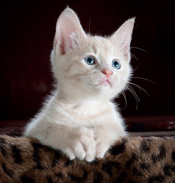 Кошки не являются антисоциальными животными — эксперименты доказали, что проблема в их хозяевах